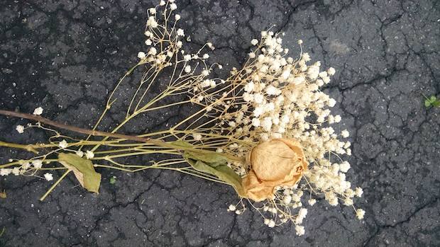 dry_flowers_on_cracked_cement